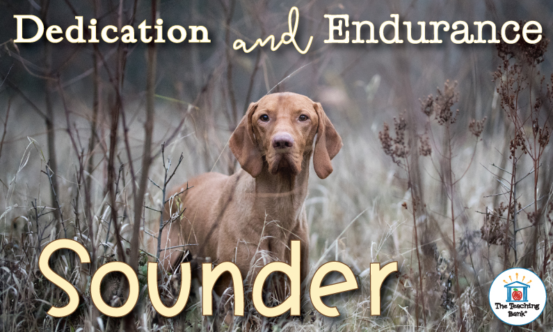Dedication and Endurance with Sounder