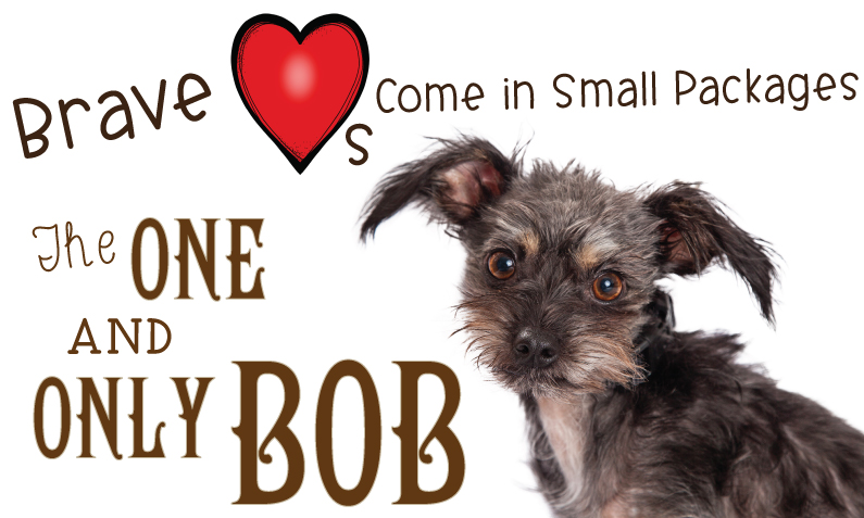 Brave Hearts Come in Small Packages: The One and Only Bob